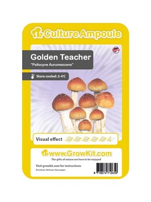 Golden Teacher - Ampoule De Culture