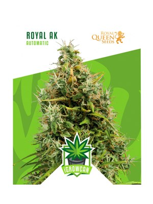Igrowcan - Royal Ak Automatic