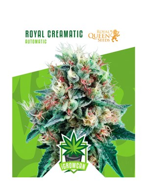 Igrowcan - Royal Creamatic Automatic