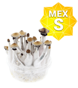 Mexicains Kit de Culture - Petit