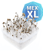 Mexican Kit de Culture - XL
