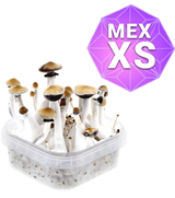 Mexicains Kit de Culture - XS