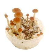 Returned Magic Mushroom Grow Boxes